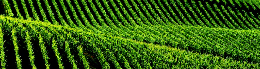 UNESCO – Paisagens de vinho de Langhe Roero e Monferrato
