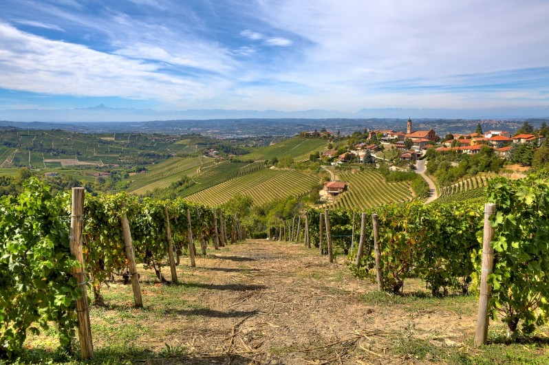 Il paesaggio collinare del Piemonte è costellato di vigneti e borghi. Foto di Rostislav Glinsky/Shutterstock