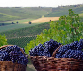 Il Piemonte del vino