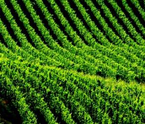 UNESCO – Langhe Roero and Monferrato wine landscapes