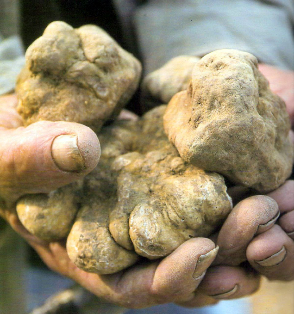 Alba and the International White Truffle Fair